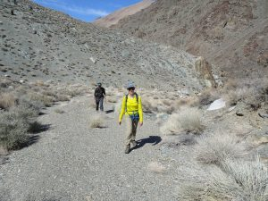 Desert wash leading to salamander habitat
